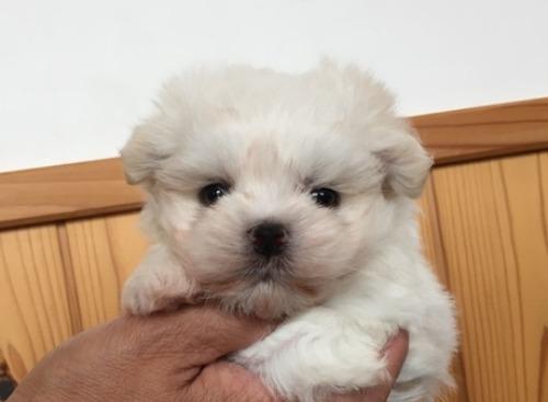 ミックスの子犬(ID:1230011004)の1枚目の写真/更新日:2019-07-29