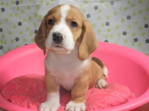 ミックスの子犬(ID:1230911080)の2枚目の写真/更新日:2017-07-02