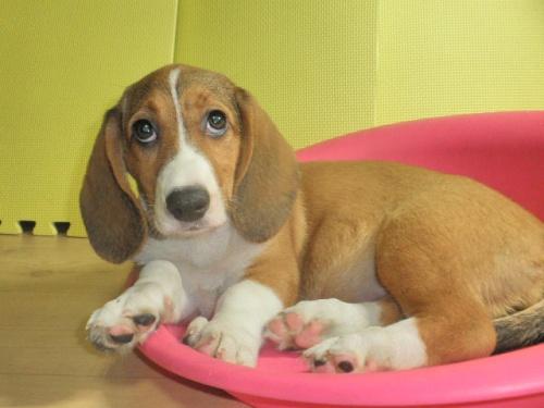 ミックスの子犬(ID:1230911083)の3枚目の写真/更新日:2017-08-10
