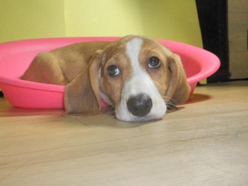 ミックスの子犬(ID:1230911085)の2枚目の写真/更新日:2017-08-08