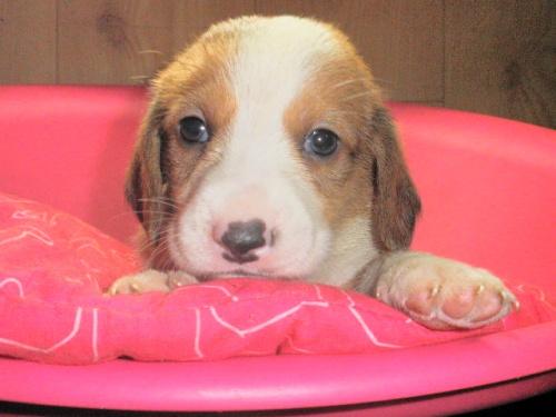 ミックスの子犬(ID:1230911086)の2枚目の写真/更新日:2017-06-13