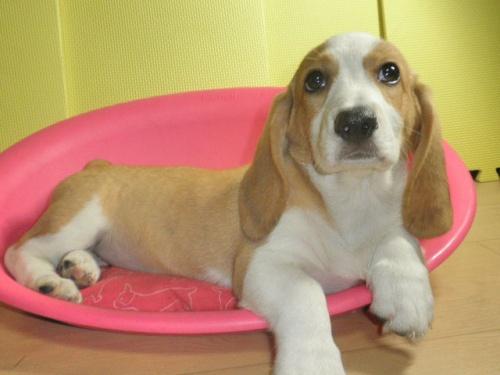 ミックスの子犬(ID:1230911089)の1枚目の写真/更新日:2017-08-06