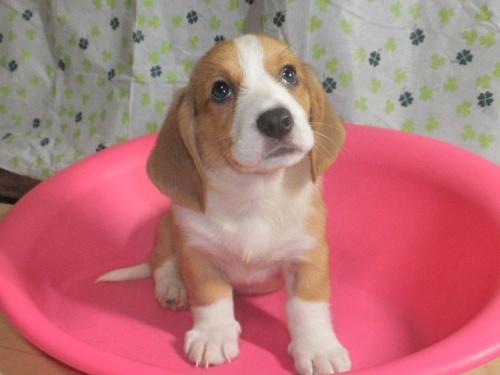 ミックスの子犬(ID:1230911090)の2枚目の写真/更新日:2017-07-15