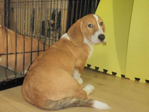 ミックスの子犬(ID:1230911093)の2枚目の写真/更新日:2017-08-06