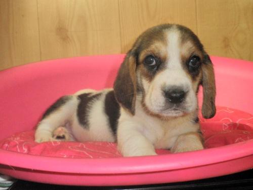 ミックスの子犬(ID:1230911095)の1枚目の写真/更新日:2017-07-21