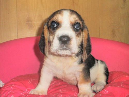 ミックスの子犬(ID:1230911095)の2枚目の写真/更新日:2017-07-21