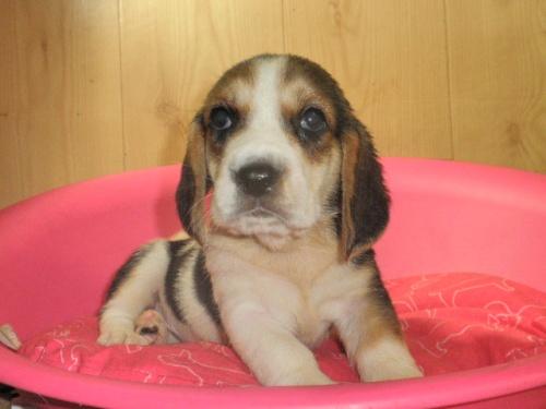 ミックスの子犬(ID:1230911095)の3枚目の写真/更新日:2017-07-21
