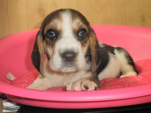 ミックスの子犬(ID:1230911095)の4枚目の写真/更新日:2017-07-21