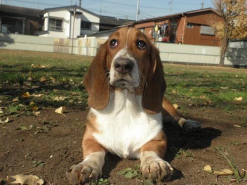 ミックスの子犬(ID:1230911096)の1枚目の写真/更新日:2017-08-04