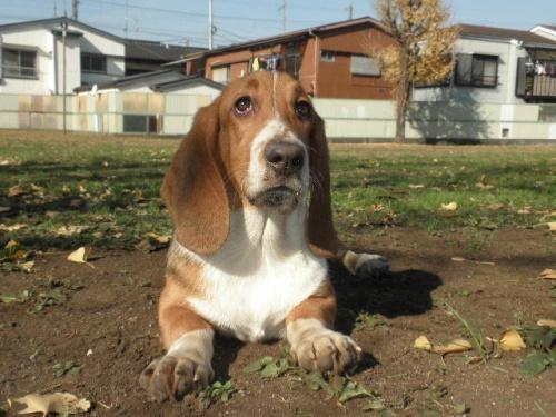 ミックスの子犬(ID:1230911096)の2枚目の写真/更新日:2017-08-04