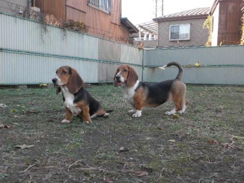 ミックスの子犬(ID:1230911096)の4枚目の写真/更新日:2017-08-04
