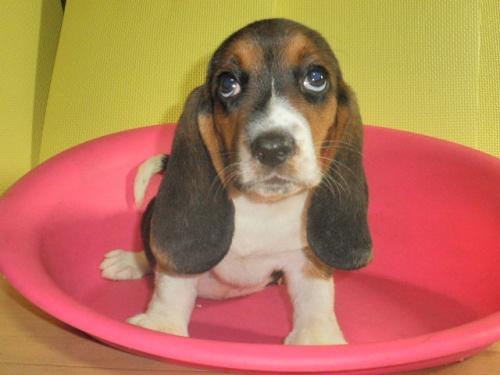 ミックスの子犬(ID:1230911097)の1枚目の写真/更新日:2017-08-08