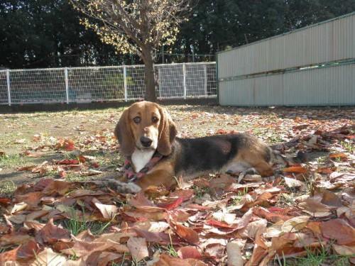 ミックスの子犬(ID:1230911100)の2枚目の写真/更新日:2017-08-04