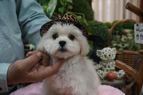 ミックスの子犬(ID:1231011295)の2枚目の写真/更新日:2017-11-04
