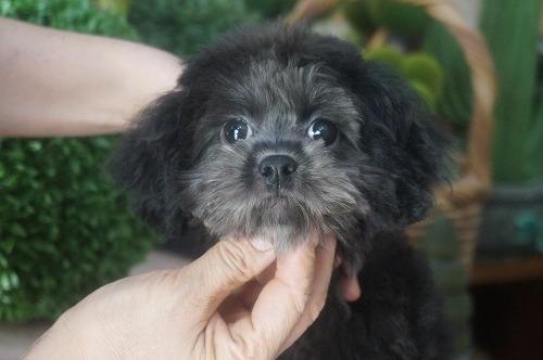 ミックスの子犬(ID:1231011394)の1枚目の写真/更新日:2018-08-07