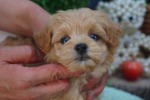 ミックスの子犬(ID:1231011397)の2枚目の写真/更新日:2018-08-08