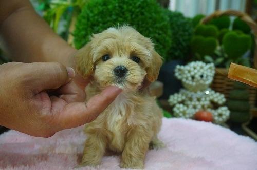 ミックスの子犬(ID:1231011398)の3枚目の写真/更新日:2018-08-08