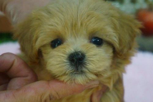 ミックスの子犬(ID:1231011399)の1枚目の写真/更新日:2018-08-08