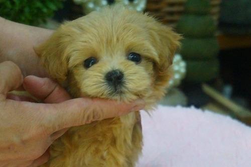 ミックスの子犬(ID:1231011399)の2枚目の写真/更新日:2018-08-08