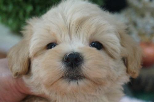 ミックスの子犬(ID:1231011461)の1枚目の写真/更新日:2019-07-04