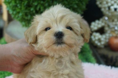 ミックスの子犬(ID:1231011461)の2枚目の写真/更新日:2019-07-04