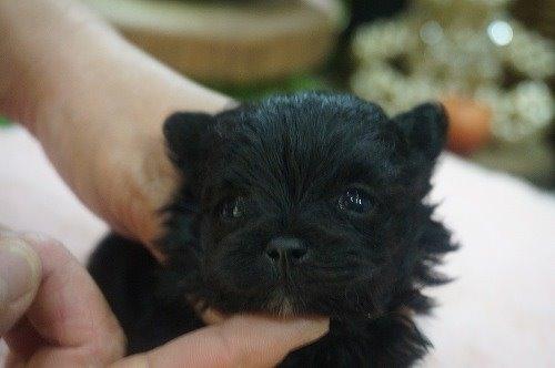 ミックスの子犬(ID:1231011524)の1枚目の写真/更新日:2020-05-12