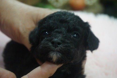 ミックスの子犬(ID:1231011530)の1枚目の写真/更新日:2020-05-26
