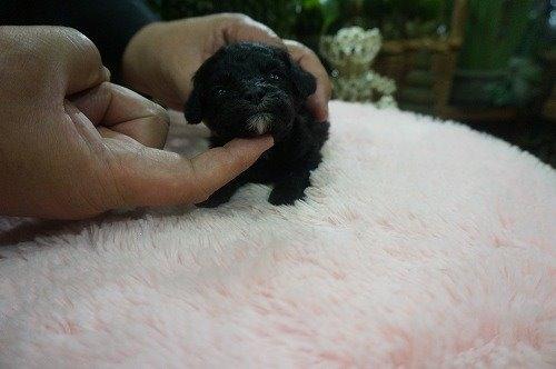 ミックスの子犬(ID:1231011530)の2枚目の写真/更新日:2020-05-26
