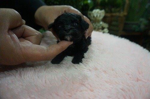 ミックスの子犬(ID:1231011530)の3枚目の写真/更新日:2020-05-26