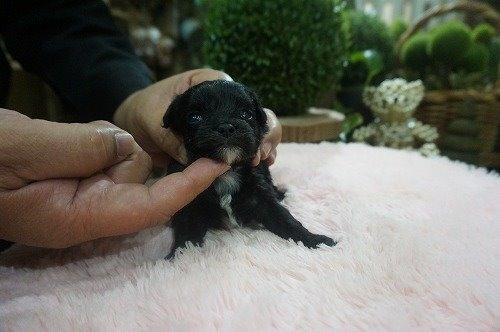 ミックスの子犬(ID:1231011531)の3枚目の写真/更新日:2020-05-27