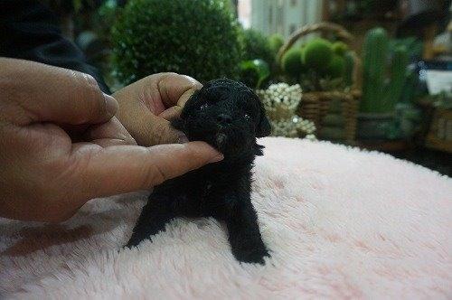 ミックスの子犬(ID:1231011532)の2枚目の写真/更新日:2020-05-27