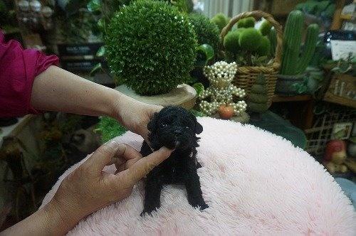 ミックスの子犬(ID:1231011532)の3枚目の写真/更新日:2020-05-27