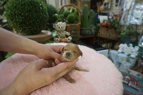 ミックスの子犬(ID:1231011546)の2枚目の写真/更新日:2020-08-20