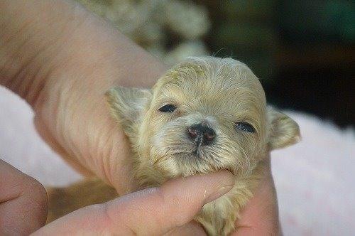 ミックスの子犬(ID:1231011551)の1枚目の写真/更新日:2020-08-25