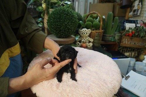 ミックスの子犬(ID:1231011552)の3枚目の写真/更新日:2020-09-08