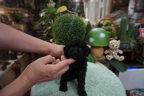 ミックスの子犬(ID:1231011630)の3枚目の写真/更新日:2021-09-17