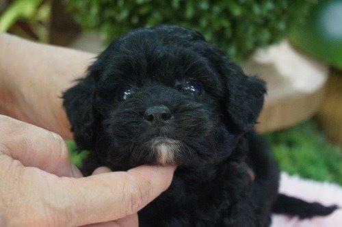 ミックスの子犬(ID:1231011631)の1枚目の写真/更新日:2021-09-17