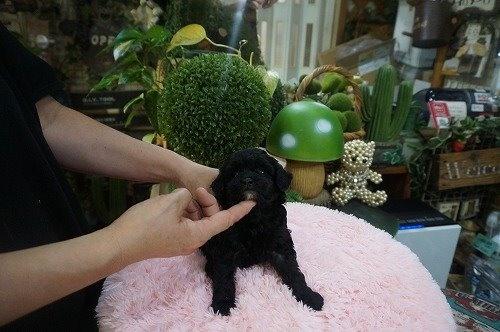 ミックスの子犬(ID:1231011631)の3枚目の写真/更新日:2021-09-17