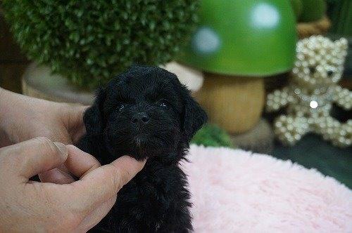 ミックスの子犬(ID:1231011632)の2枚目の写真/更新日:2021-09-17