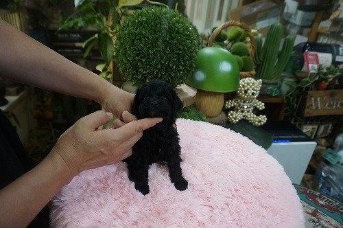 ミックスの子犬(ID:1231011632)の3枚目の写真/更新日:2021-09-17