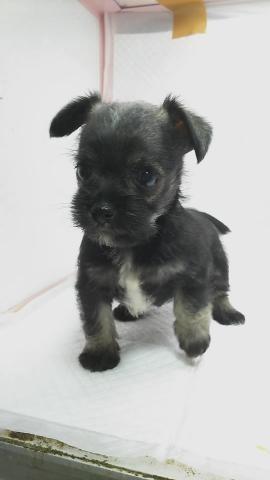 ミックスの子犬(ID:1231911066)の1枚目の写真/更新日:2018-05-13