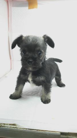 ミックスの子犬(ID:1231911066)の2枚目の写真/更新日:2018-05-13