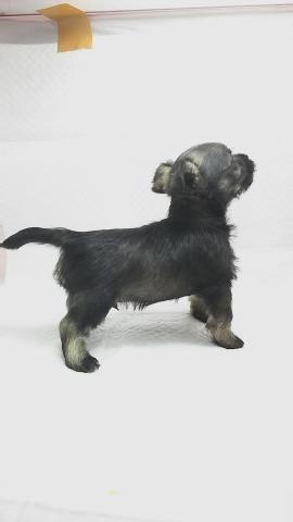 ミックスの子犬(ID:1231911066)の3枚目の写真/更新日:2018-05-13