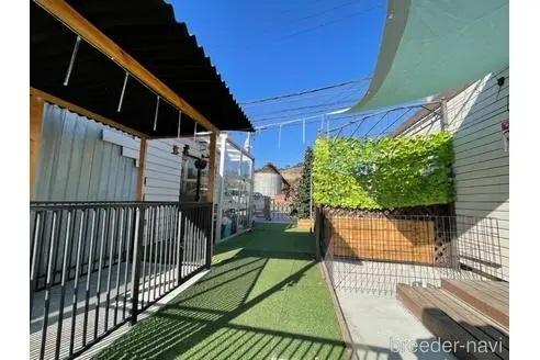 ボーダーコリーの子犬(ID:1232311018)の2枚目の写真/更新日:2019-11-23