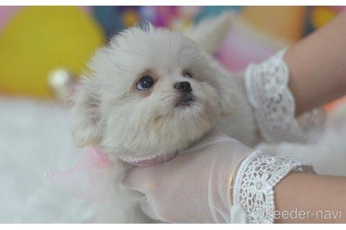 ミックスの子犬(ID:1234911233)の2枚目の写真/更新日:2021-07-08