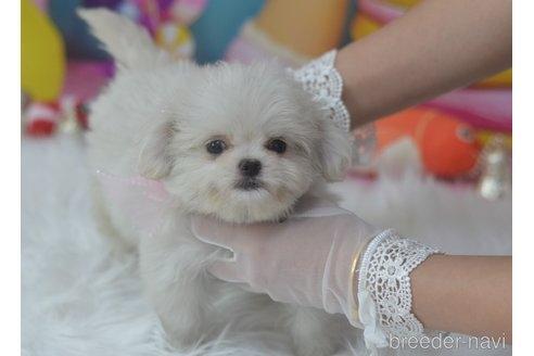 ミックスの子犬(ID:1234911233)の3枚目の写真/更新日:2021-07-08