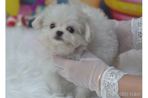 ミックスの子犬(ID:1234911233)の4枚目の写真/更新日:2021-07-08