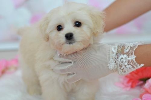 ミックスの子犬(ID:1234911234)の2枚目の写真/更新日:2021-07-08