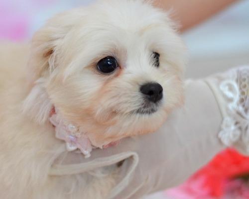 ミックスの子犬(ID:1234911234)の3枚目の写真/更新日:2021-07-08