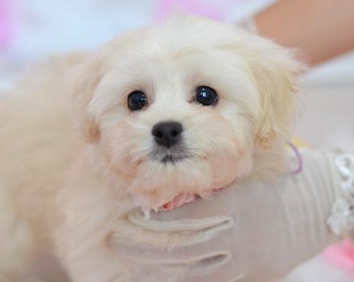 ミックスの子犬(ID:1234911234)の4枚目の写真/更新日:2021-07-08